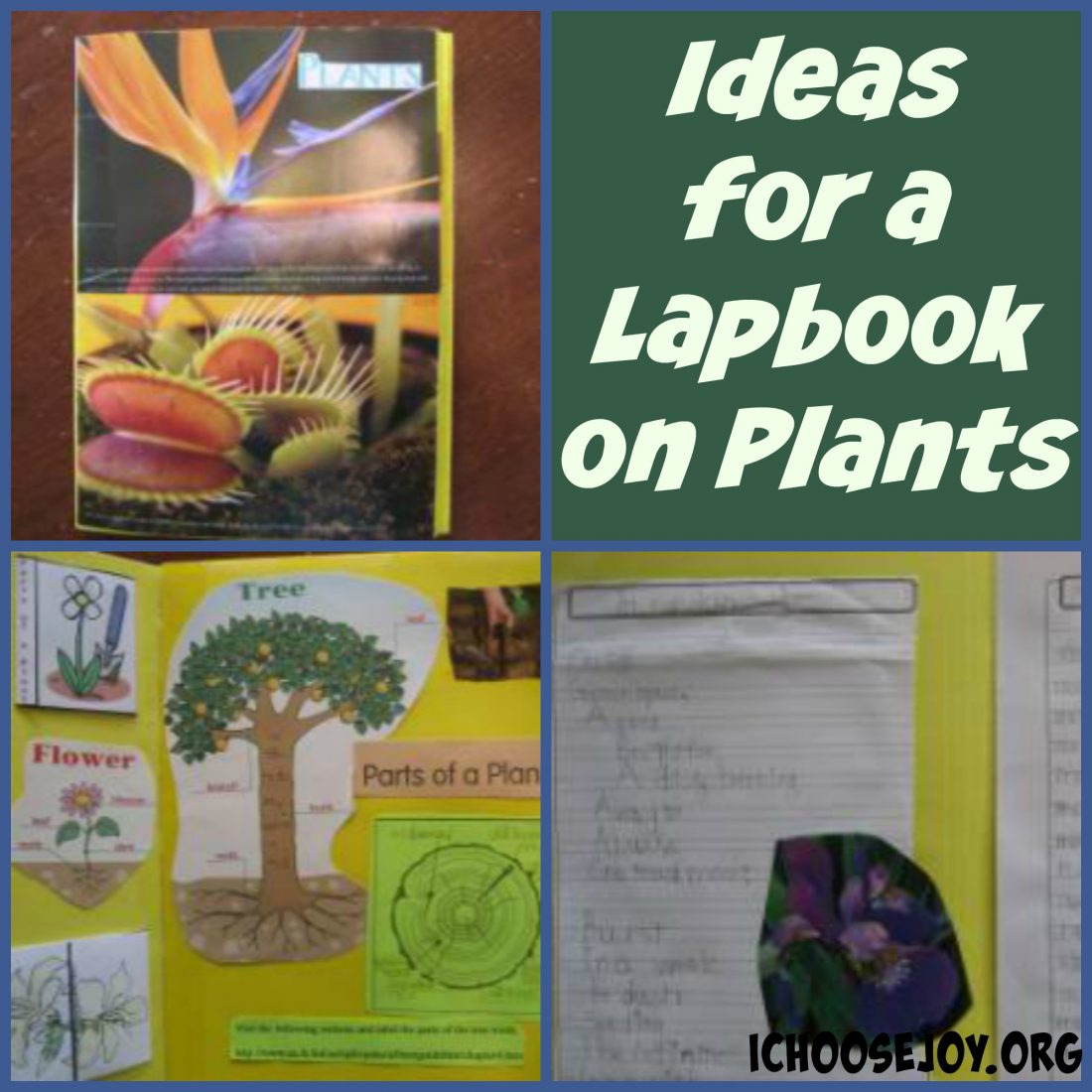 Awesome Ideas and Resources for a Plants Lapbook