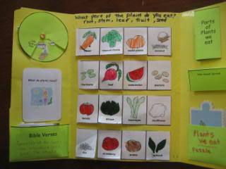 Ideas for a Plants lapbook