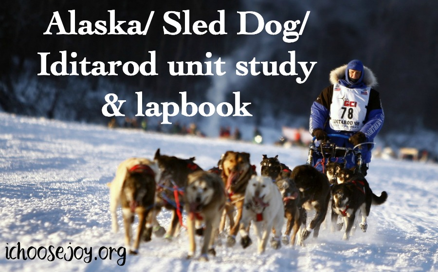 Come learn all about Alaska, Sled Dogs, and the Iditarod with this unit study and lapbook. #iditarod #alaska #homeschool #ichoosejoyblog