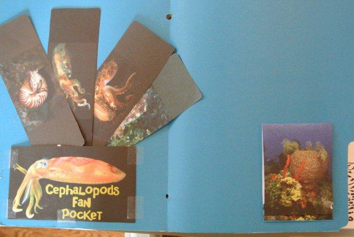 Apologia Zoology 2 Lapbook 003