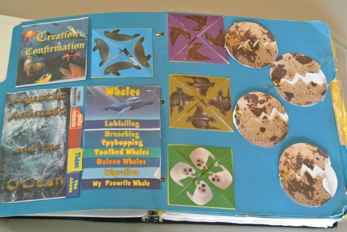 Apologia Zoology 2 lapbook 013