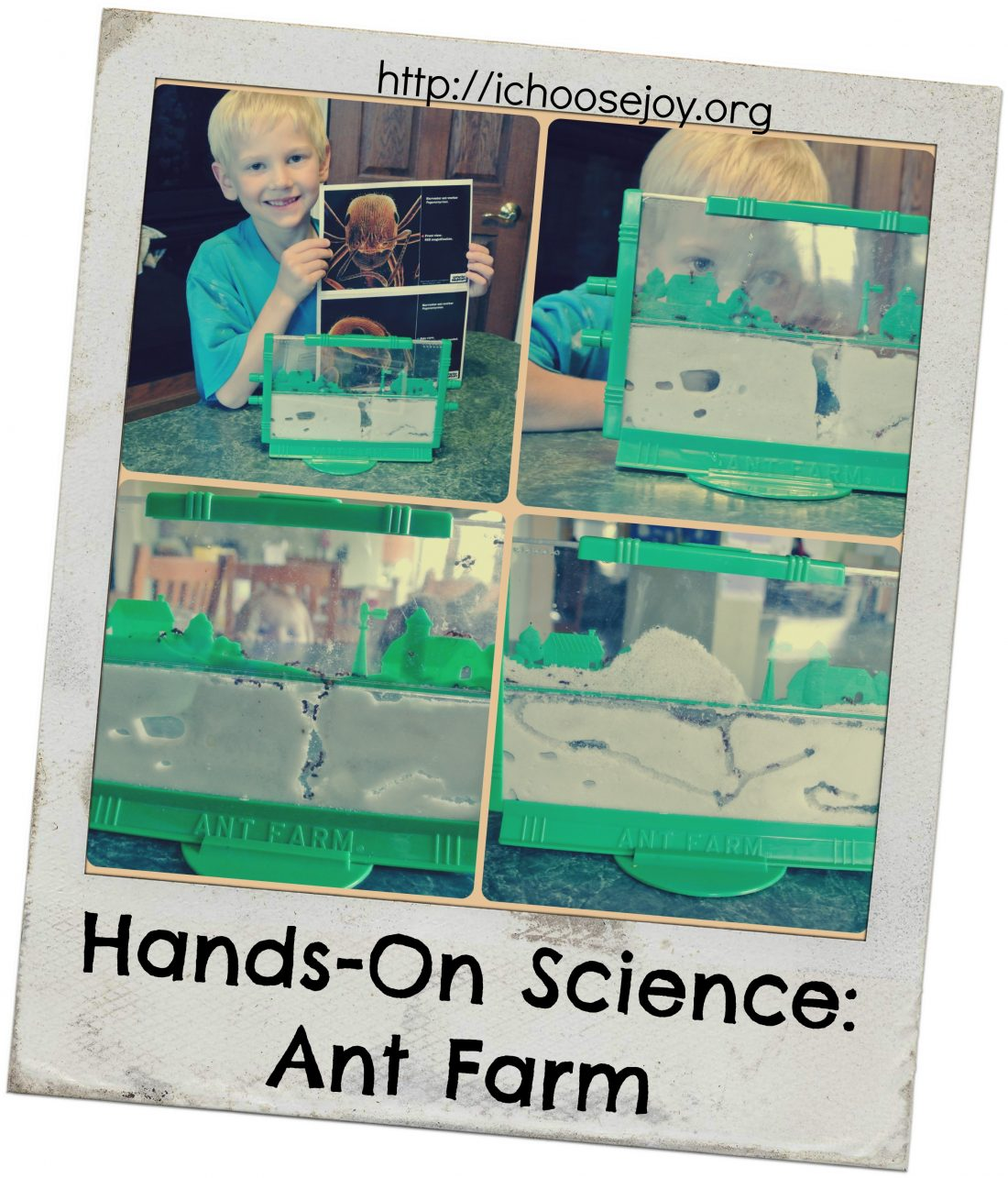 From House to Home {Link Party}: Ant Farm