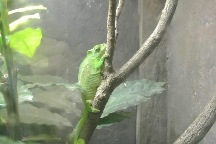 zoo Creation Museum 029