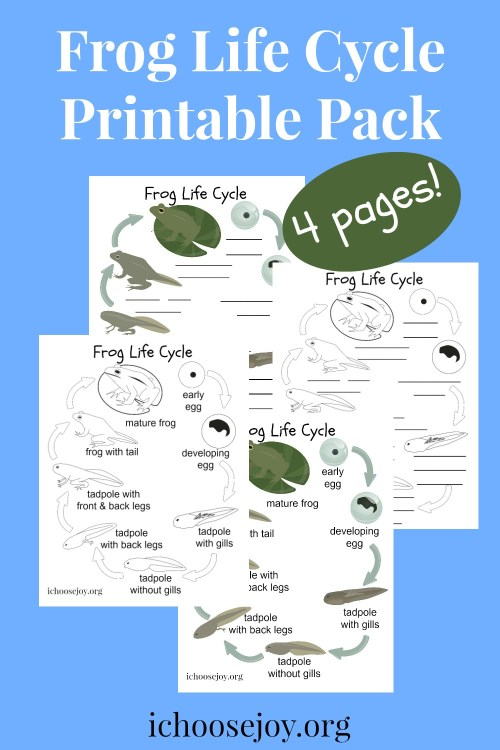 Frog Life Cycle Printable Pack 4 pages, or get 1 page for free. #frogs #froglifecycle #elementaryscience #ichoosejoyblog
