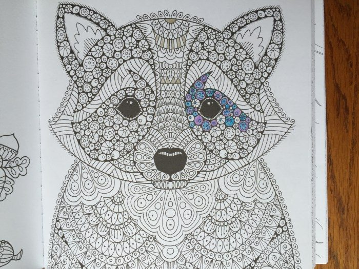 Raccoon in Wonders of Creation Coloring Book