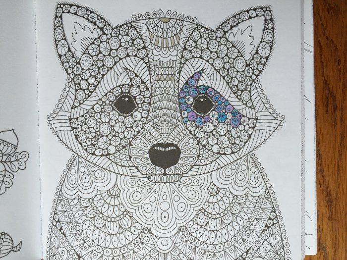 Raccoon in Wonders of Creation Coloring Book