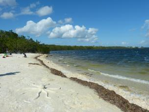 Strand im John Pennekamp Coral Reef State Park
