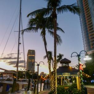 Palmen mit Lichterketten