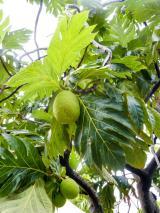 Tropische Früchte-1200x900