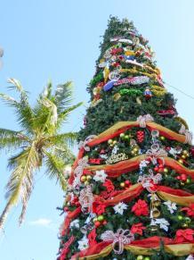 Weihnachtsbaum auf den Bahamas-900x1200