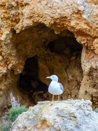 Algarve Lagos Ponta da Piedade Felsenlandschaft