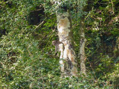 Thailand Khao Sok Nationalpark Dschungel Kajaktour Kajak Paddeln Fluss Affen