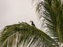 Thailand Koh Ngai Koh Hai Insel Andamanensee Inselparadies Strand Doppelhornvogel Nashornvogel