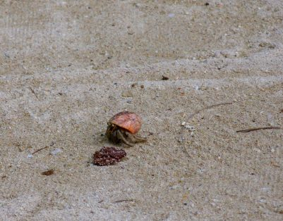 Thailand Koh Ngai Koh Hai Insel Andamanensee Inselparadies Strand Krebs Einsiedlerkrebs