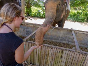 Thailand Khao Sok Nationalpark Dschungel Win Elephant Camp Elefantencamp Elefantenfüttern Fütterung Elefant