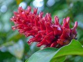 Thailand Khao Sok Nationalpark Dschungel Anurak Community Lodge Pflanze