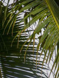Thailand Koh Ngai Koh Hai Insel Andamanensee Inselparadies Strand Palme