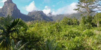 Thailand Khao Sok Nationalpark Dschungel Anurak Community Lodge Ausblick