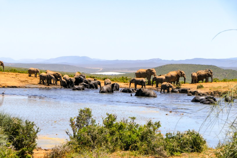 Südafrika South Africa Addo Elephant Nationalpark Safari Elefanten Wasserloch