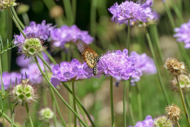 Südafrika South Africa Kapstadt Cape Town Kirstenbosch Botanical Garden Botanischer Garten Blumen Schmetterling