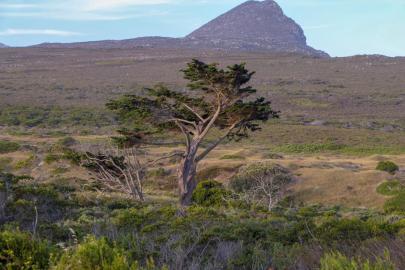 Südafrika South Africa Kap Halbinsel Cape Point Nationalpark Landschaft Baum