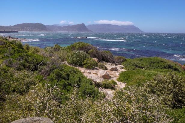 Südafrika South Africa Kap Halbinsel Simons Town Boulders Beach Pinguinkolonie False Bay