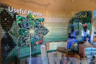 Südafrika South Africa Kapstadt Cape Town Kirstenbosch Botanical Garden Botanischer Garten Nützliche Pflanzen