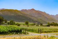 Südafrika South Africa Weinregion Winelands Franschhoek Weinfelder Berge