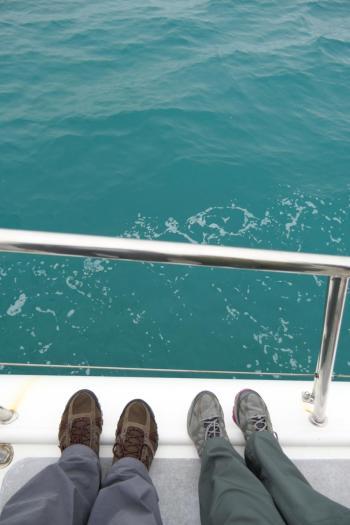 Südafrika South Africa Hermanus Kap Walker Bay Whale Watching Walbeobachtung Southern Right Charters Katamaran