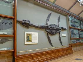 Großbritannien England UK London Natural History Museum Wal Skelett