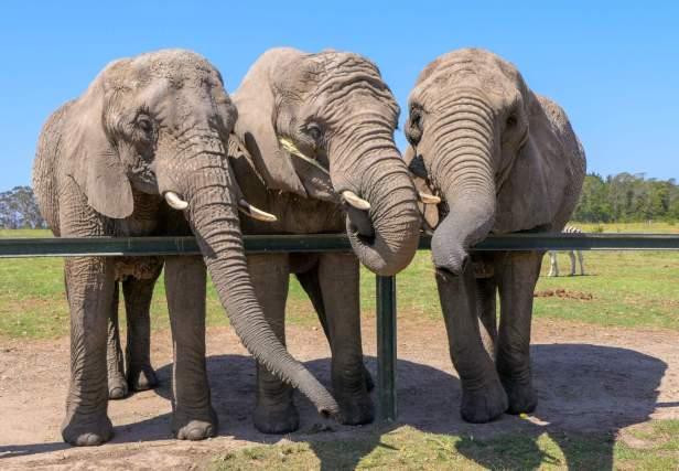 Afrika Südafrika South Africa Garden Route Knysna Elephant Park Elefanten Foto
