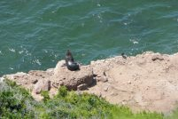 Südafrika South Africa Garden Route Kap Plettenberg Bay Robberg Nature Reserve Naturreservat Halbinsel Wanderung Seehunde Robben