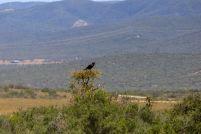 Südafrika South Africa Garden Route Ostkap Addo Elephant Nationalpark Safari Tiere Vogel