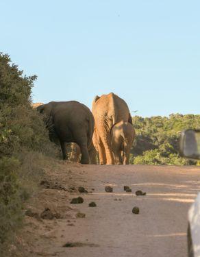 Südafrika South Africa Garden Route Ostkap Addo Elephant Nationalpark Safari Tiere Elefanten Straße
