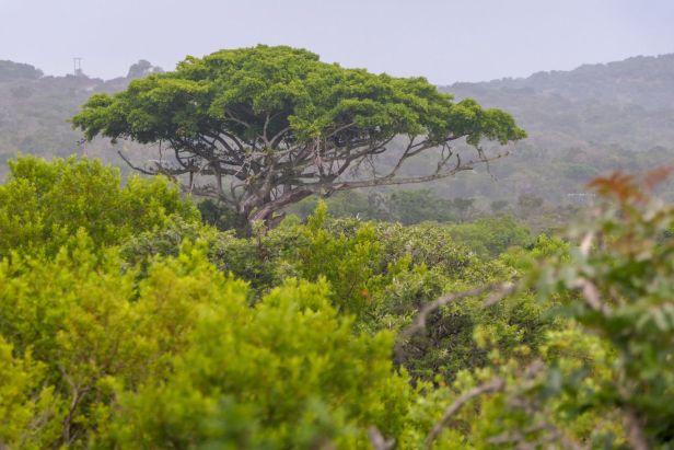Südafrika South Africa Garden Route Ostkap Sibuya Game Reserve Wildreservat Game Drive Safari Baum Busch