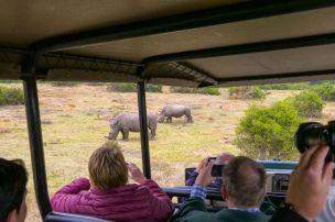 Südafrika South Africa Garden Route Ostkap Sibuya Game Reserve Wildreservat Morgen Safari Game Drive Nashorn Rhino