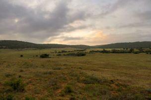 Südafrika South Africa Garden Route Ostkap Sibuya Game Reserve Wildreservat Safari Game Drive Sundowner