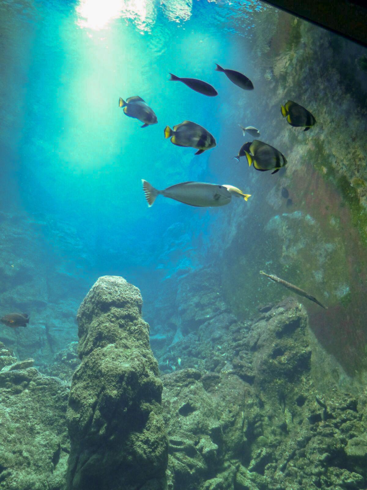 Bremerhaven Deutschland Klimahaus Museum Klima Wetter Unterwasserwelt Samoa