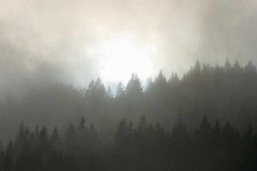 Deutschland Schwarzwald Hochschwarzwald Aftersteg Wald Nebel