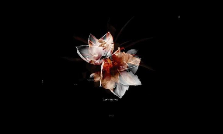 Das letzte Ritual: In Memoriam 2, Bild: Lexis Numerique
