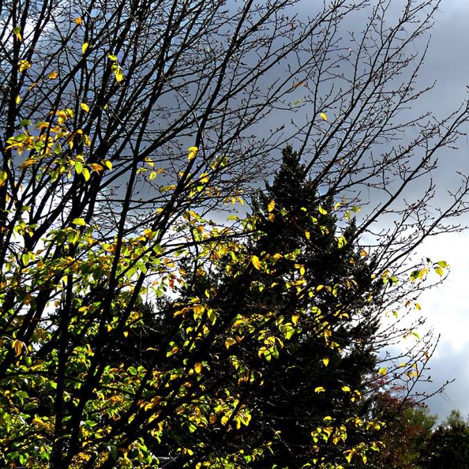 Zur Ehrenrettung des Herbstes