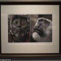 VIDÉO - Chine : Des photos comparant des Africains à des animaux retirées d'une exposition