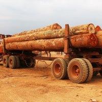 Le Congo a perdu plus de 12 milliards FCFA en deux ans dans la filière bois