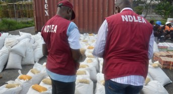 Kano Drug Peddlers Recruit Almajiris-NDLEA