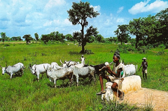 Image result for Ogun farmers, cattle breeders sign peace pact