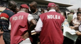 NDLEA Raids Popular Drug Joints In Kano
