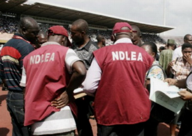 ndlea-raids-popular-drug-joints-in-kano