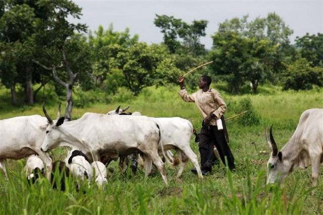 Bayelsa Maps Out 1,200 Hectares For Ranch Development