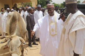 Governor Aminu Waziri Tambuwal admiring a cow during his visit to SG Adiya Farms in Sokoto.