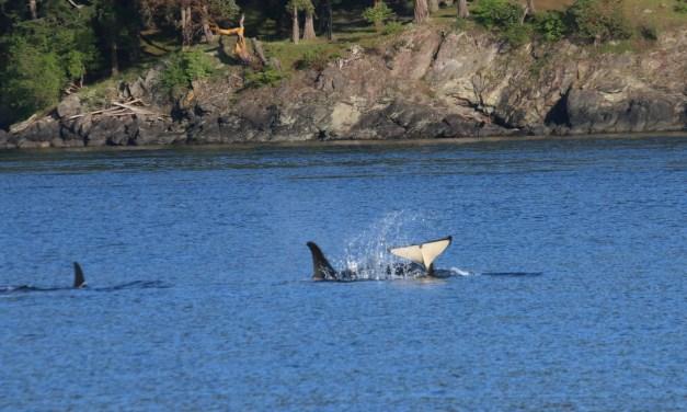 A Day on Orcas Island